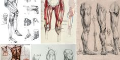 Enjoy a collection of references for Character Design: Legs Anatomy. The collection contains illustrations, sketches, model sheets and tutorials…