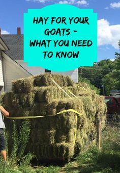 for Goats - Selecting Good Quality Hay Hay is the cornerstone to a healthy goat diet. Learn how to select the right hay for your goats.Hay is the cornerstone to a healthy goat diet. Learn how to select the right hay for your goats. Keeping Goats, Raising Goats, Goat Playground, Playground Ideas, Pallet Playground, Goat Toys, Goat Shelter, Goat Pen, Nubian Goat