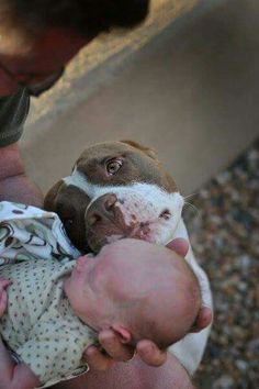 Beautiful moment.  THIS  is a Pit Bull's true nature... loving... caring... loyal
