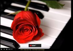 """Laura 1979, """"A Rose And A Tear"""" Text & Music Laura Branigan"""