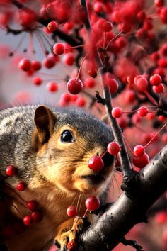 **Sneaky squirrel