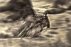 Image result for wildlife fine art