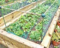 Strawberry Garden Ideas tiered whiskey barrel strawberry planter diy strawberries pinterest strawberry planters diy strawberry planters and whiskey barrels Image Result For Strawberry Garden Ideas Groente Pinterest Strawberries Garden Garden Ideas And Gardens
