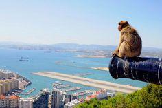 Skurrile Flughäfen: Gibraltar hat den absurdesten Airport der Welt - Ein Berberaffe blickt von einer alten britischen Militärkanone auf dem Gibraltar Rock Richtung Airport http://www.travelbook.de/europa/Skurrile-Flughaefen-Gibraltar-hat-den-absurdesten-Airport-der-Welt-618102.html