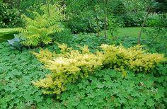 slideshow of my 54 top shade plants - A Way To Garden - Pergola Ideas Pergola Garden, Pergola Shade, Diy Pergola, Backyard, Outdoor Pergola, Aluminum Pergola, Retractable Pergola, Taxus Baccata, Shade Canopy