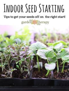 Seed starting is a fun early season gardening project. It takes up a little space and even less time, but the rewards are huge. There are many reasons why people grow their flowers and vegetable plants...