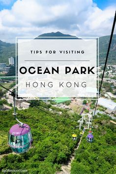 Learn the best travel tips for visiting Ocean Park, a sea-themed attraction in Hong Kong, from navigating crowds to best things to see with kids for a day of family fun.