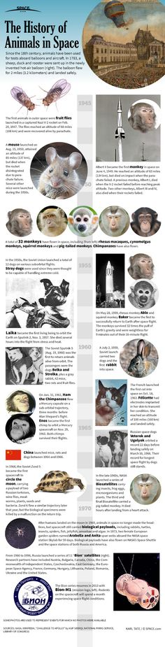 Infographic: The history of animals used for testing in space flight. Two days ago the BION-M1 mission - the last one in this list - was successfully launched from Baikonur Cosmodrome