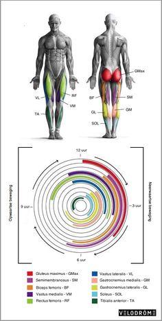 De anatomie van het fietsen   Velodrome