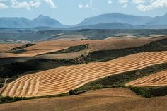 Western Cape to receive R7.8-billion in investments Atmospheric Circulation, Nature Climate Change, University Of Reading, Effects Of Global Warming, Parts Of The Earth, Wheat Fields, Continents, Free Pictures, Global Food