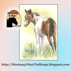 Mustang A Day Personal Challenge of LindaLMartin: Bandy 2013 Filly of Sand Wash Basn HMA Challenge Image#427