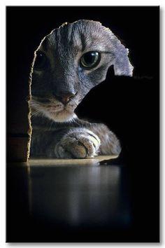 Kissa ja rotta. Kissan kuva ja mustaa paperia?