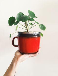 i love my plants. pilea peperomioides