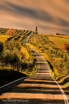This looks like the road to my house in Tuscany, once I win the lotto :)