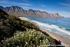 The beautiful Kogelberg Nature Reserve in the Western Cape of South Africa is one of the most floristically-diverse in the world, with more than 1 000 species in just 70 square kilometres. Nature Reserve, Im In Love, Conservation, South Africa, National Parks, Mountains, City, World, Beach