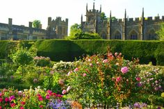 Sudeley Castle's Queens Garden, famous for its old-fashioned roses and topiary hedges #cotswolds