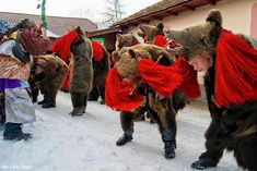 """""""going with the bear"""" (Christmastime), Moldavia Bad Spirits, Ursula, Festival Party, 4th Of July Wreath, Lion Sculpture, Winter, Romania, Sony, Bears"""