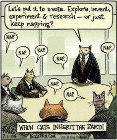 When cats inherit the Earth - Bizarro by Dan Piraro. Funny Cartoons, Funny Cats, Funny Animals, Baby Animals, Cat Comics, Archie Comics, Crazy Cat Lady, Crazy Cats, Cat Jokes