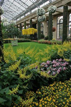 Longwood Gardens, Chrysanthemum 'Edo 21'