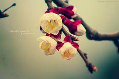 Love spring!!!