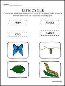 """FREE SCIENCE LESSON – """"Butterfly Life Cycle Freebie"""" - Go to The Best of Teacher Entrepreneurs for this and hundreds of free lessons. Pre-Kindergarten - 1st Grade  #FreeLesson  #Science   http://thebestofteacherentrepreneursmarketingcooperative.net/free-science-lesson-butterfly-life-cycle-freebie/"""