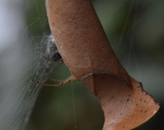 Spider Is Hiding by Tomislav Vucic on
