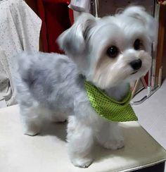cute puppy dog ♥♥♥♥