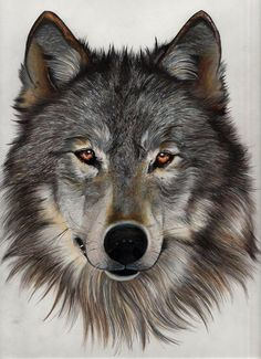 painting by Marion Charente - painting by Marion Charente - Madara Wallpaper, Wolf Wallpaper, Wolf Tattoo Design, Wolf Spirit, Spirit Animal, Beautiful Wolves, Animals Beautiful, Animal Drawings, Art Drawings