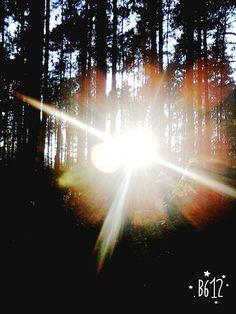 #słonko#drzewa#las