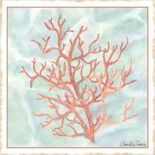 Coral Artwork