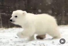 Image: Video still of 4-month-old polar bear Luna (Courtesy of NowThisNews)