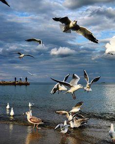 Image may contain: bird, sky, outdoor, water and nature Nature Animals, Animals And Pets, Beautiful Birds, Animals Beautiful, Nicolas Vanier, Sea Birds, Beach Scenes, Wildlife Art, Bird Art