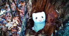 When you see this adorable and spontaneous game of hide and seek, you can't help but squeal with delight. I don't know what's cuter, this tiny ermine or his sweet squeaky noises! Now I'm watching this on repeat.   ***AWWW.... IT LOOKS LIKE A LITTLE PICACHU!!!  COOL VIDEO***
