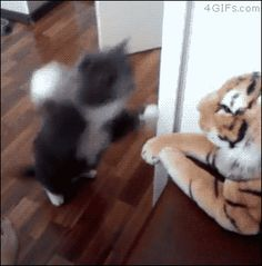 A cat slaps a stuffed animal tiger