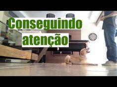 Como conseguir atenção e interesse do seu cachorro - Adestramento Positivo - Positive Dog Training - YouTube
