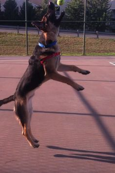 love this picture of Zeus catching his ball