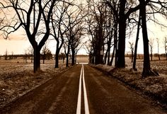 z_tree_lined_road1.png (350×240)
