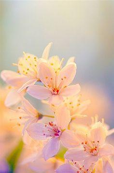 6 x anthurie pétales blanc ART FLEURS-soie fleurs