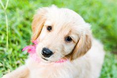 plantas tóxicas nocivas Pet Accessories, Pets, Animals, Decor, Diy Dog, Garden, Baby Cubs, Vegetable Garden, Plants