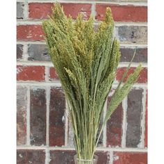 @curiouscountry posted to Instagram: Natural Canary Grass makes a great greenery for dried flower bouquets, wreaths and arrangements.  It's a vibrant color, has interesting texture, and adds volume to any bouquet.  Pair it with dried flowers or a variety of sola wood flowers for a stunning bouquet. #canary #driedgrass #driedflowers #diycrafts #flowerarrangement #floraldesign #floralarrangement #diycrafts #diybouquet #florists #greenery