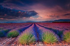 Valensole (France) by Eric Rousset on 500px