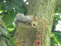 Squirrels @Perry Hall Park
