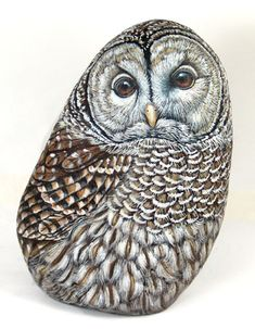 Barred Owl by sassidipinti, via Flickr