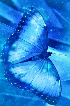 Blue Butterfly...                                                                                                                                                                                 More