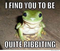 Fun Claw - Funny Cats, Funny Dogs, Funny Animals: Funny Pictures Of Animals - 20 Pics Cute Animal Videos, Funny Animal Pictures, Funny Animals, Cute Animals, Smiling Animals, Funny Images, Funny Frogs, Cute Frogs, Rage Comics