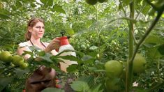 Garden Windows, Fertility, Solar, Vegetables, Tudor, Teenagers, Gardens, Lawn And Garden, Plant
