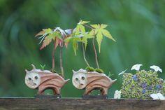 Super mini bonsai blog