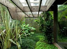The São Paulo home of Julio Roberto Katinsky is a living, breathing masterpiece of Brazilian modernism: all curves, concrete and creeping vegetation - Photography by Ricardo Labougle