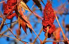 Fall colour  Katja Wulfers©
