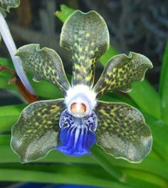 There are so many different types of flowers from around the world. This list offers some of the most popular that have their own spectacular features. Strange Flowers, Unusual Flowers, Wonderful Flowers, Rare Flowers, Beautiful Flowers, Green Orchid, Orchid Plants, Blue Green, Unusual Plants